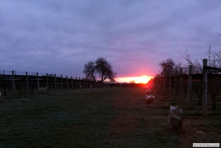 Easter Sunrise Service Jonathan Edwards Winery